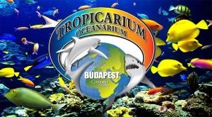 Budapešť - advent a Tropicarium-6
