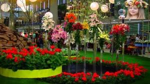 Flora Olomouc-11